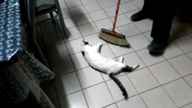 モップの前に寝転んで飼い主に床滑りを催促するおもしろい猫(笑)