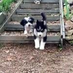 元気に階段を駆け降りてくる3匹のワンちゃん…、の筈だったのに