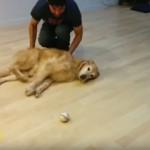怠け者ワンちゃんのボール遊び(笑)