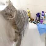 シャワーを浴びている所へやって来た猫、何を始めるのかと思ったら…