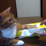 独占欲の強い愛猫と飼い主のティッシュ攻防戦(笑)