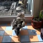 なんという脱力感!?|日当たりの良い窓際でボウルに入りながらお昼寝中のニャンコ(笑)