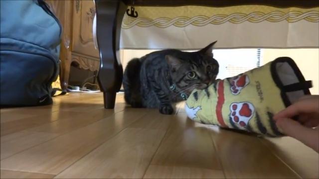 洗濯しようとするとウニャウニャ鳴いてオモチャを離してくれない猫