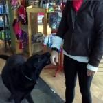 来店したお客さんをちゃっかり自分のオヤツの場所に案内するマスコット犬