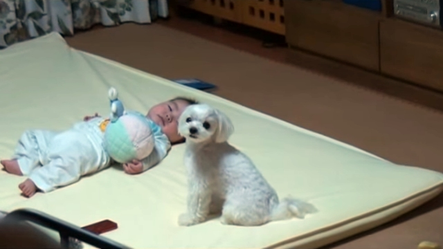 ぐずつく赤ちゃんを一瞬で泣き止ますワンちゃん、その方法は…?