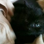 路上でさ迷っていたところを保護された子猫、成長するにつれて驚きの変化が…