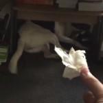 うちの犬はイタズラをしてもすぐにバレる → 尻尾をみれば一目瞭然(笑)