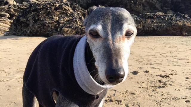 安楽死という苦渋の決断を下した飼い主、愛犬との最後の散歩に胸を打たれる