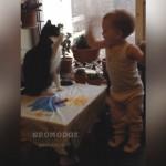 猫と赤ちゃんのゆるーい猫パンチ対決に思わずほっこり♡
