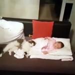 大好きにゃ~♡|引き離そうとしても赤ちゃんのそばで添い寝をやめない猫