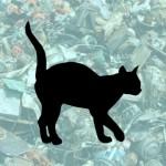 猫はどこ?|背景に溶け込んだ猫探しクイズ 1問