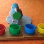 ボタンを色ごとに選り分けて同じ色のキャップの中に投入する賢いインコ