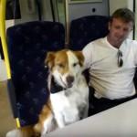 自宅をこっそり抜け出した愛犬、気がついたら飼い主が乗る通勤列車に…、なんで?