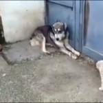 子犬たちを驚かせようと軽い気持ちで一吠えした犬。まさかの展開にタジタジ(笑)