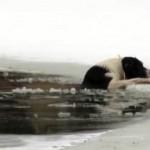 氷の池に落ちてしまった犬。救助隊を待つ猶予もなく、裸になった男性が決死の救助
