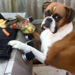 大流行の「マネキンチャレンジ」に触発されたボクサー犬