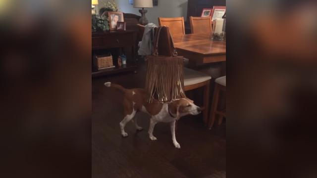 背中をなでるようなフリンジ(ひらひら飾り)の感触にハマってしまった犬