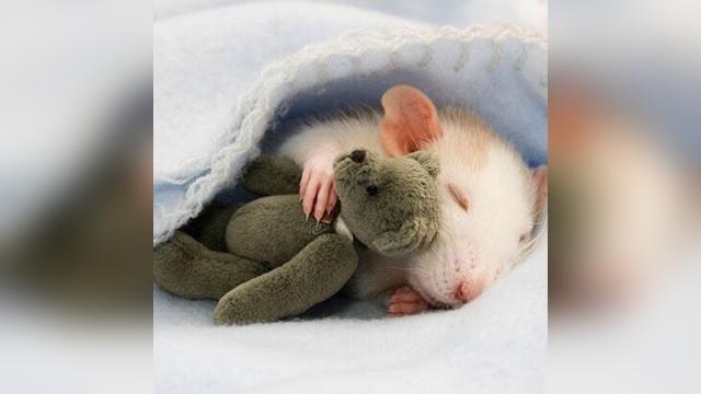 寒い季節にぴったり、あったかーい気持ちにさせてくれる動物たちの写真集 15選