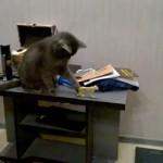 このネコ粗暴につき、前に物を置くべからず!