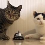 呼び鈴を鳴らすとご飯がもらえることを完璧に猫が理解した結果
