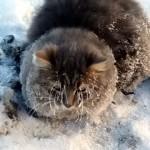 手足が凍りつき地面に張り付いてしまい、身動きがとれなくなった猫の救出劇