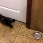 ドアの隙間から隣の部屋を覗き込む子猫、まさかの展開に驚き!!