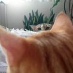 茶トラ猫を撮影中、もう一匹の猫が顔を覗かせたと思ったら…(笑)