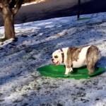 これは楽しそう!|初雪を見て大はしゃぎをするワンちゃんたち。