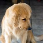エリザベスカラーを装着した犬。塞ぎ込んでいないか覗いてみたところ…