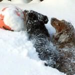 なんてこった!?|雪の庭を駆け回ってきた2匹の愛犬、とんでもない姿に