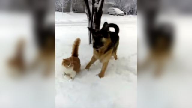 雪の中で遊ぶ子猫の元へやって来たワンコ。何をするのかと思ったら…