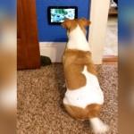 テレビが大好きな愛犬にiPadをプレゼントした結果、喜び様が予想以上なんだけど…