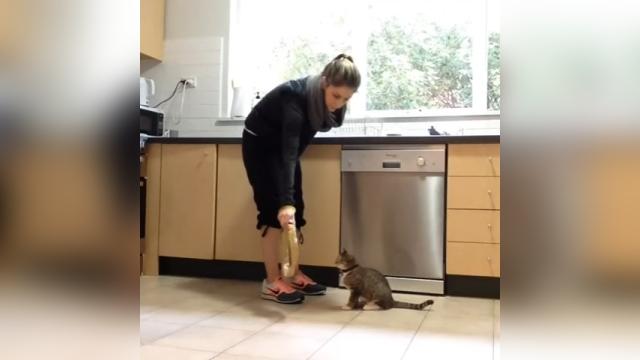 これはスゴイ!?|気ままな猫に芸を仕込んだ結果