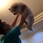 高い高いされている可愛らしい子犬 → 9か月後、予想をはるかに超える姿に