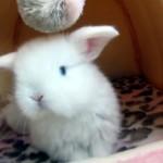 ヒーリング効果満点!?|モフモフ綿毛の子ウサギのまったりとした映像♡