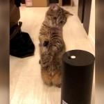 これ何かにゃ~?|初めて見る加湿器の蒸気が気になって仕方がない子猫