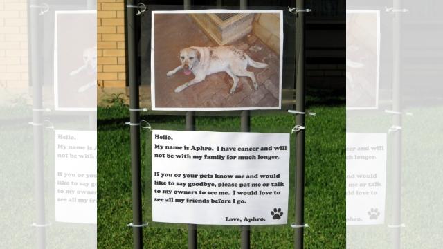 天国へ旅立つ愛犬のために最後にしてやれること → 一枚の貼り紙に願いを託す飼い主