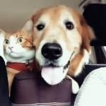 お出かけするときのテンションに差があり過ぎる犬と猫(笑)