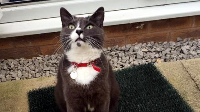 外に出かけてはお土産に或るものを持ち帰ってくる猫…飼い主さんも困惑(笑)