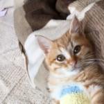 お姉さんちの子猫の写真に悶絶!?…可愛すぎてもうぶっ倒れそう♡