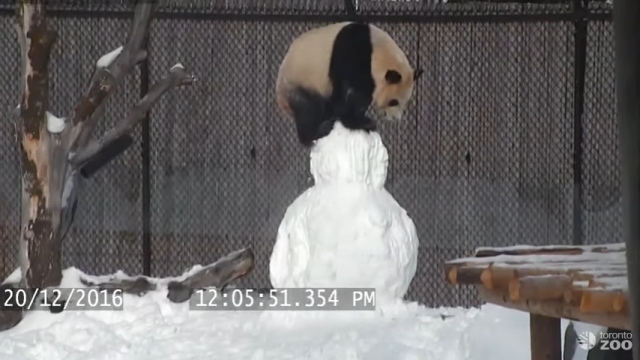 雪だるまを作ってもらったパンダ。上に乗ってはしゃいでいると…