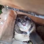 鳥のエサ箱から大量のエサを盗み食い → 太りすぎて抜け出せなくなってしまったリス(笑)