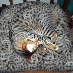 周りにある物とそっくりに擬態化してしまったステレス猫ちゃんたち 30枚