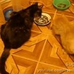 エサを少しずつ横取りする猫 → 最後は大胆な行動に…(笑)