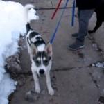 いつもは2匹一緒に散歩する犬を別々に散歩させてみた結果