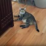 ものぐさな猫にピンポン玉を投げてみた → まさかの反応…なんてこった!