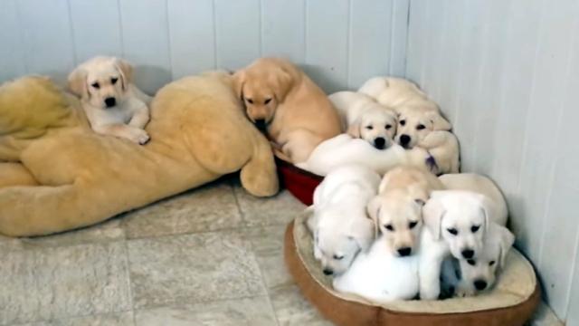お昼寝に最適な場所を見つけたワンコたち → どんどん数が増えていくけど…(笑)