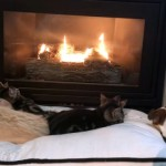 暖炉の前でくつろぐ子猫たち → 飼い主の或る一声で一斉に移動開始(笑)