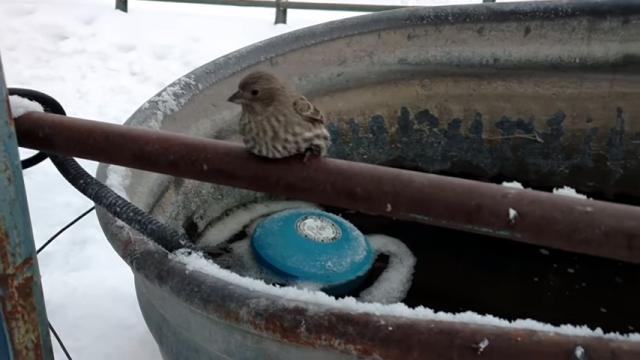 鉄パイプに足が凍りついて動けなくなった小鳥を救出する男性