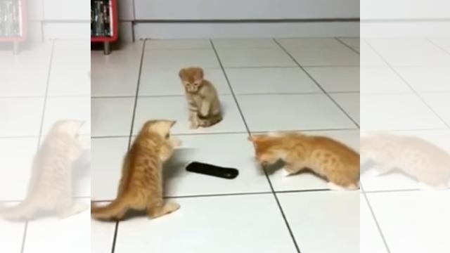 突如現れたリモコンを敵と認定! → 恐る恐る猫パンチを繰り出す3匹の子猫たち(笑)